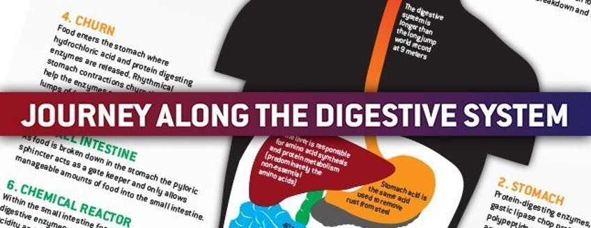 maxinutrition-digestion-system-journey.jpg