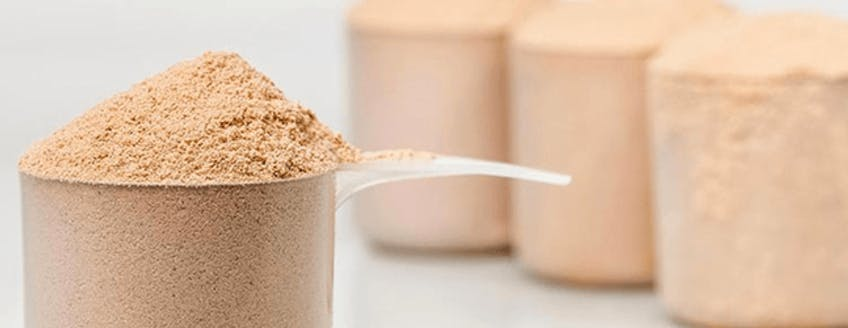 whey-protein-guide-header.png